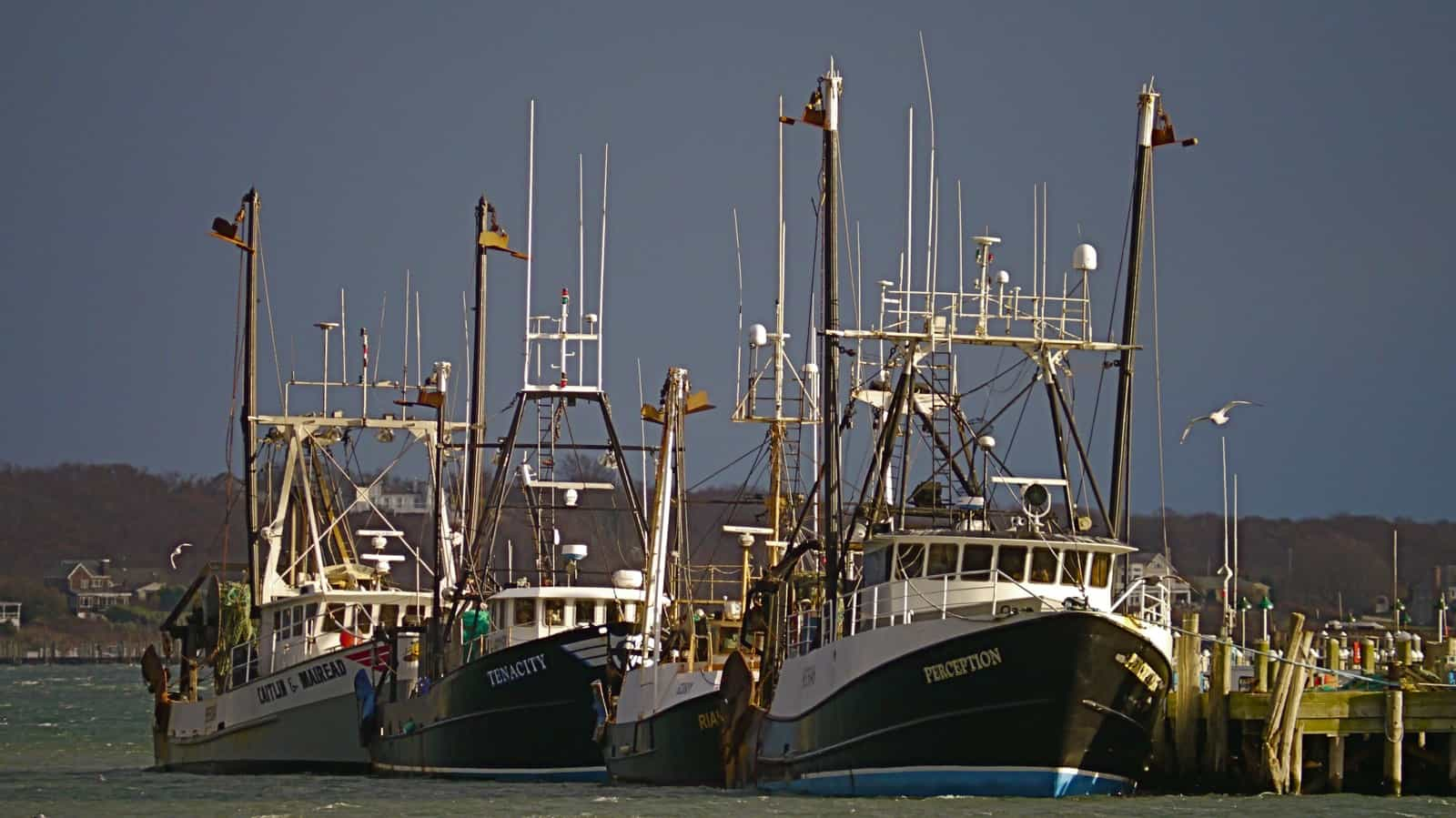 F/V Perception, F/V Rianda S, S/V Tenacity, and S/V Caitlin & Mairead lay on town dock. Montauk Harbor, NY
