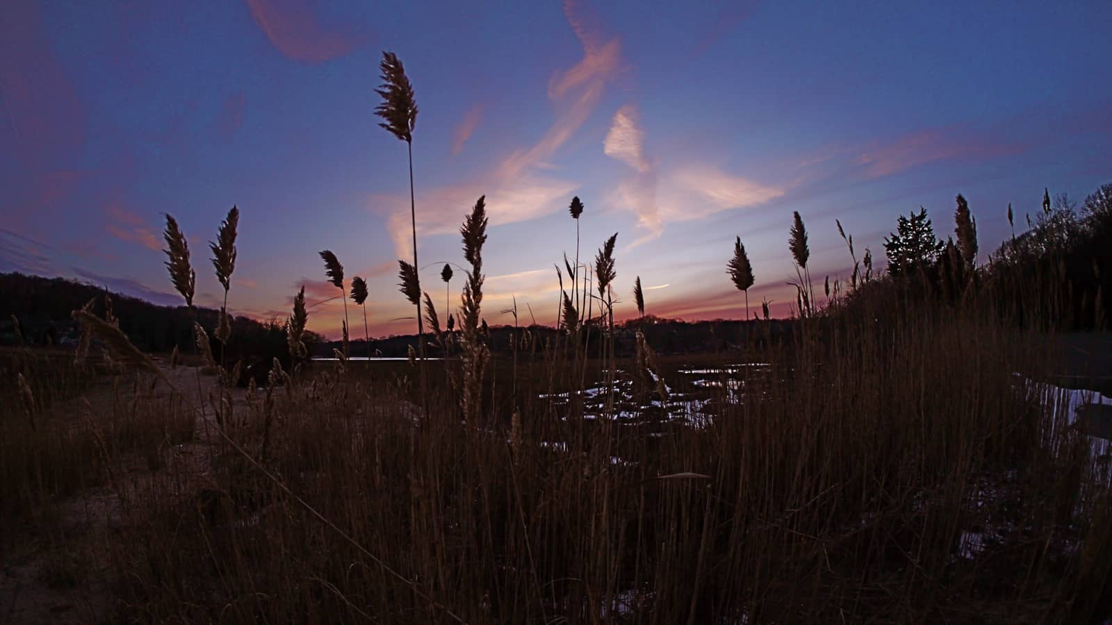 Rushes Against a Painted Sky, Hands Creek, Three Mile Harbor, East Hampton NY