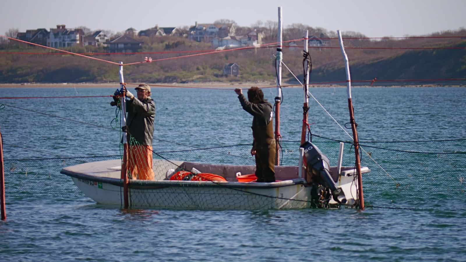 Close-up: Setting up a fishtrap off Navy Beach, Culloden Point in the background, Montauk NY, photo by Sailing Montauk