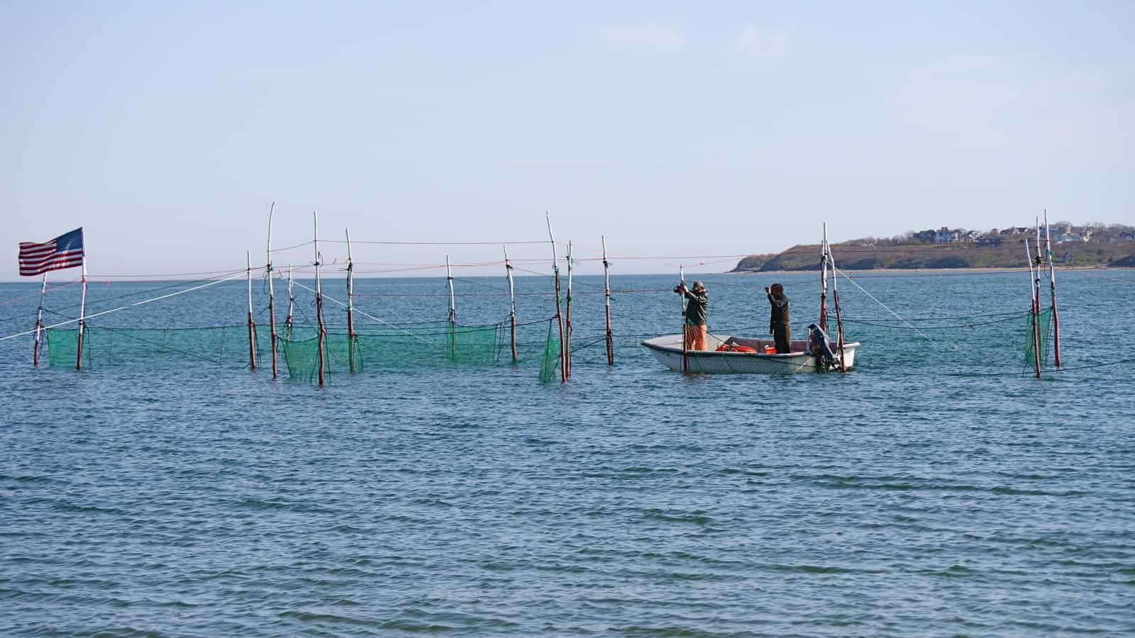 Setting up a fishtrap off Navy Beach, Culloden Point in the background, Montauk NY, photo by Sailing Montauk